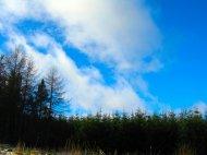 las i niebo - fototapeta